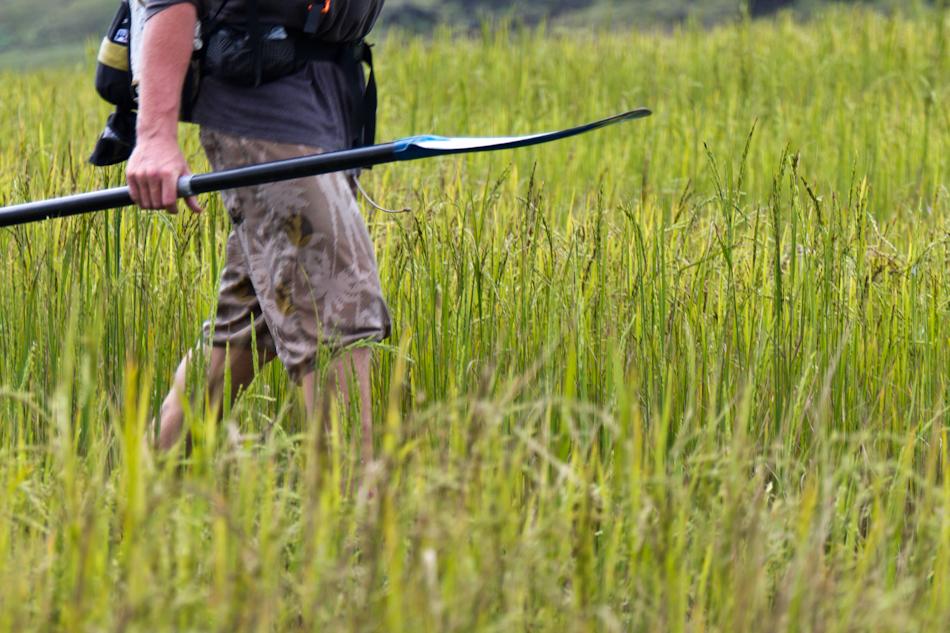 Dan Rea-Dickins, rice paddies