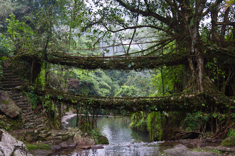 Nongriat living root bridges
